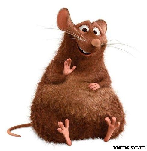 весёлая крыса